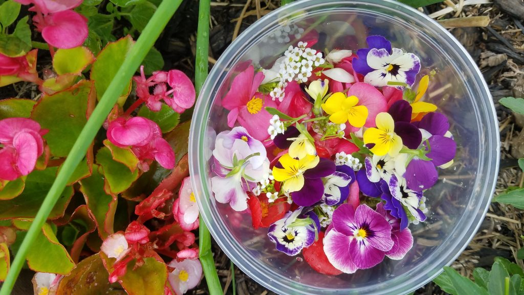 Picture of our harvest of edible flowers