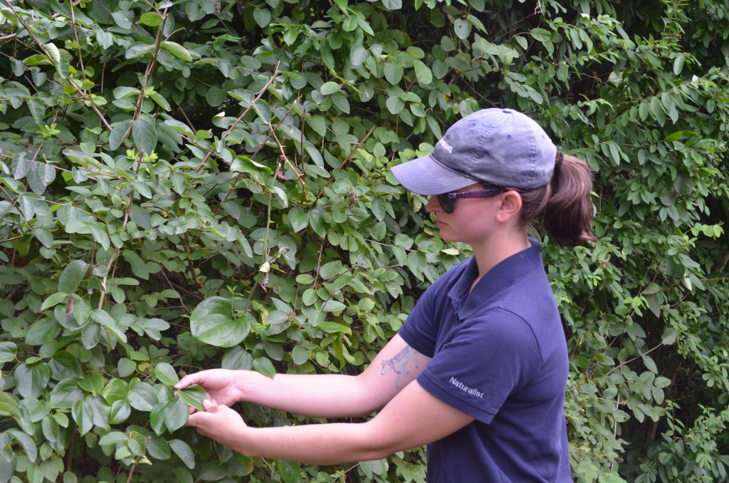 Photo of Naturalist Kaitlin looking at leaves