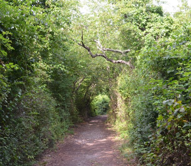 Picture of path on Nature walk