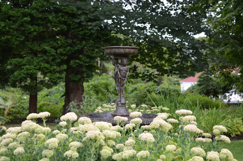 Picture of fountain amongst the flora on nature walk