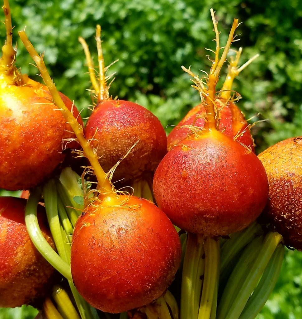 picture of golden beets