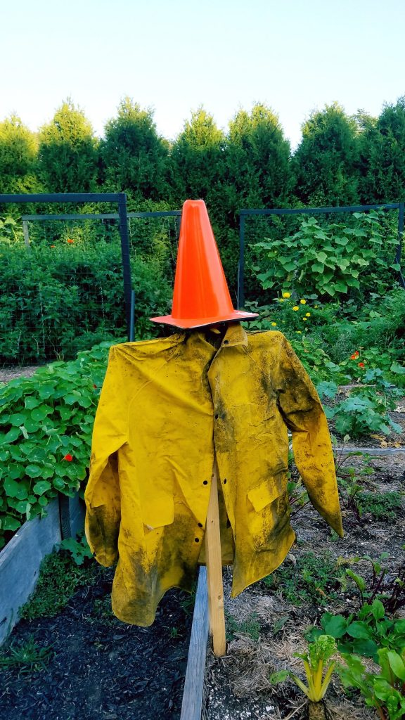 Picture of scarecrow in garden