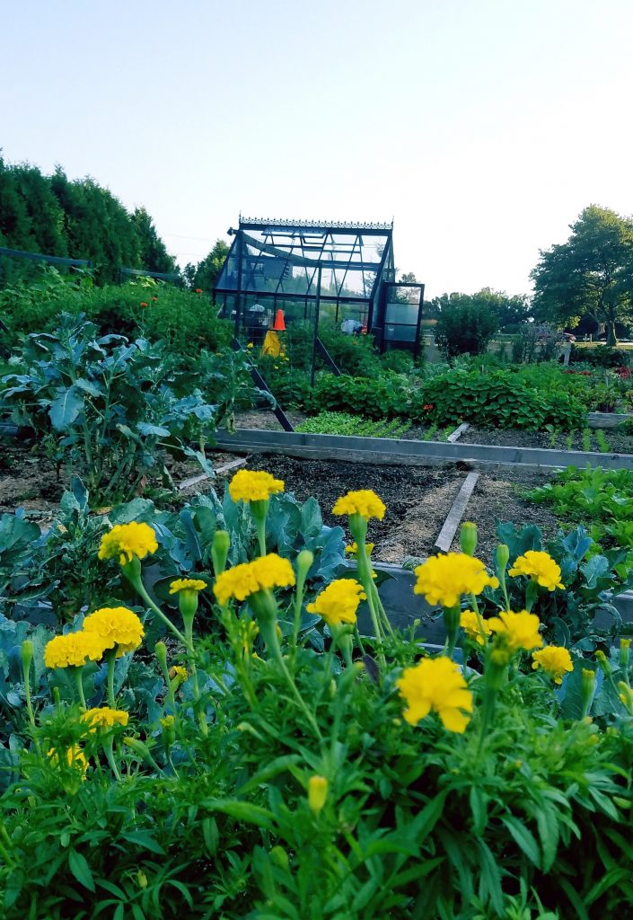 Picture of garden and greenhouse in September
