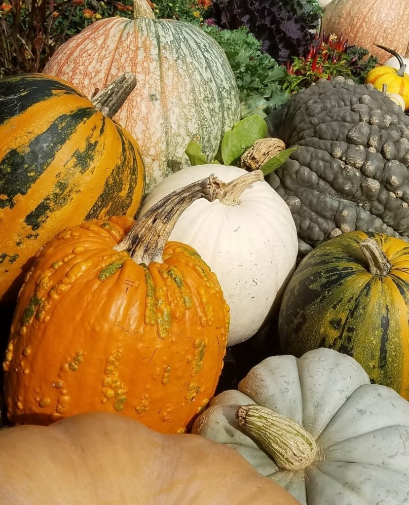Picture of a variety of pumpkins