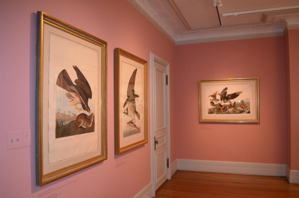 John James Audubon: Obsession Untamed Exhibit