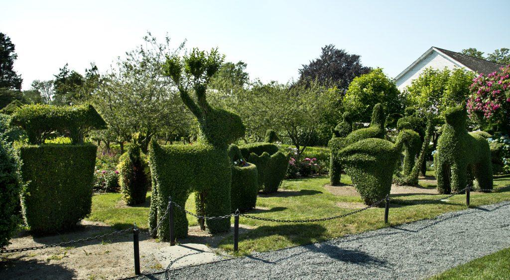 Upper garden (Gavin Ashworth)