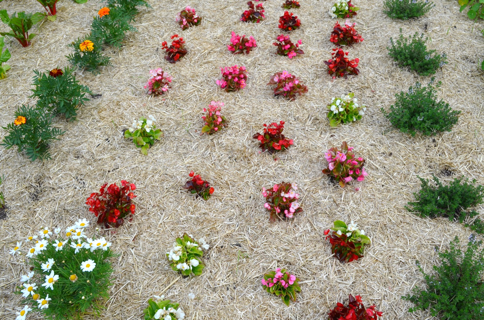 Flowers in the raised beds